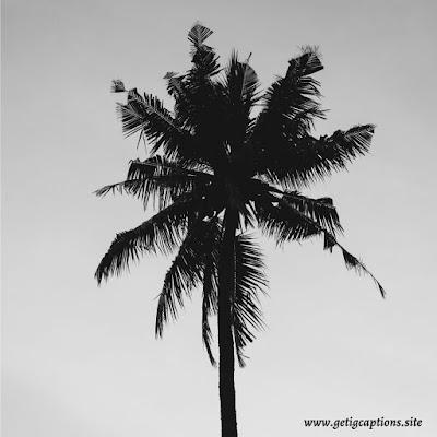 Tree Captions,Instagram Tree Captions,Tree Captions For Instagram