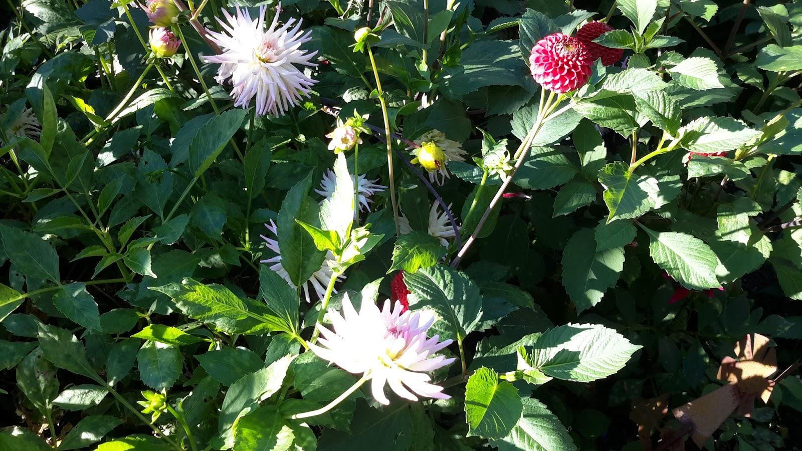 Rubato bloemen uit de tuin