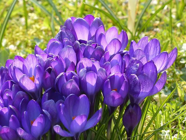 Frühlingsrätsel, Demenzbetreuung, Seniorenarbeit, Beschäftigung, Gedächtnistraining