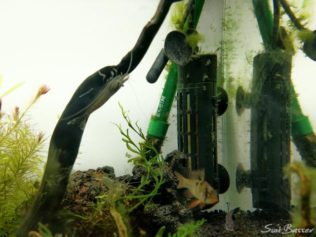 水槽ヒーター 掃除