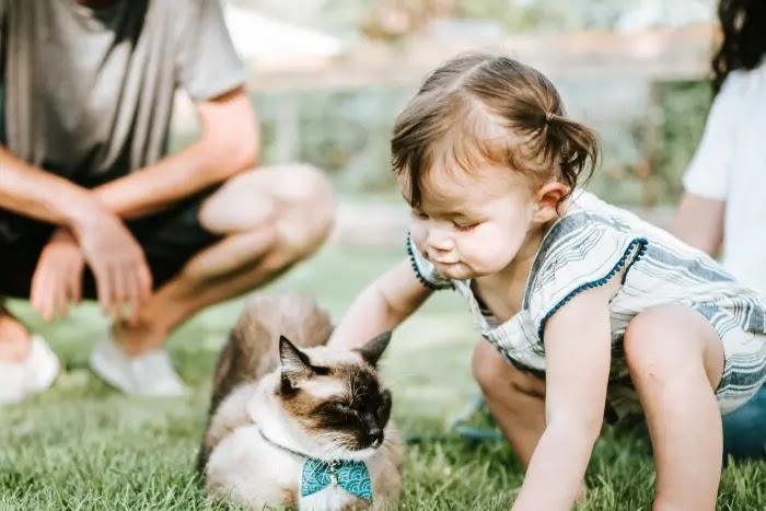 Manfaat Memelihara Hewan di Rumah bagi Anak