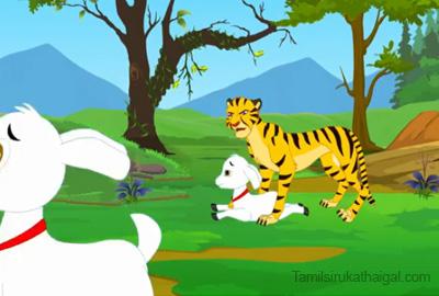 cheetah chasing goat