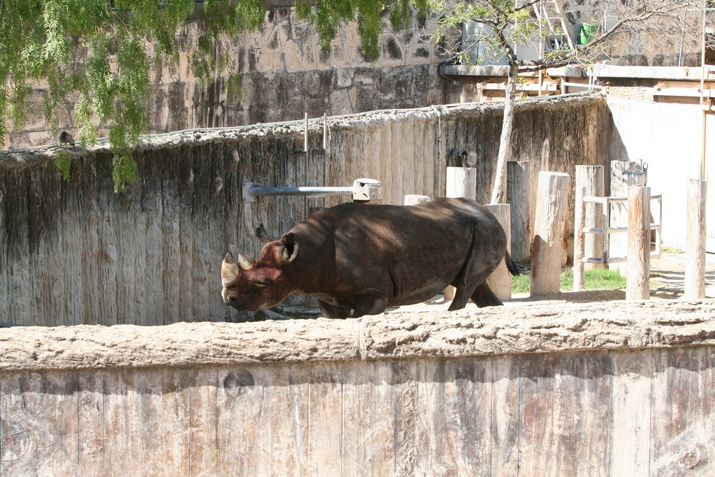 The Circus Quot No Spin Zone Quot San Antonio Zoo Rhino Complex
