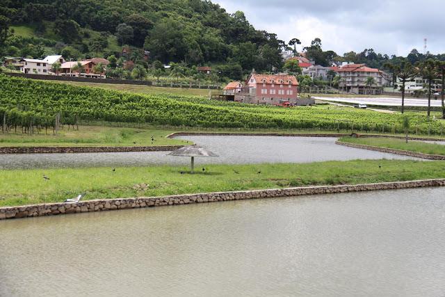 Blog Apaixonados por Viagens - Vindima - Vinícola Luiz Argenta, Rio Grande do Sul
