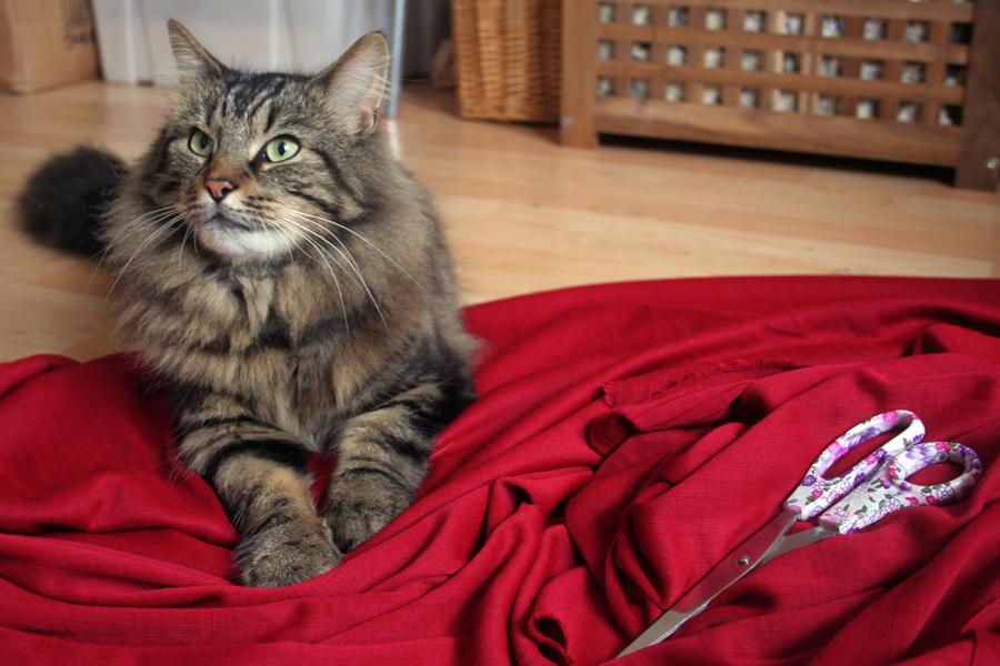 My cat Beau attempting to sleep on my fabric