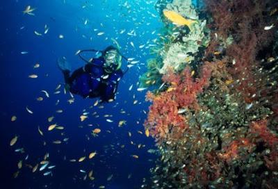 Diving Di Pulau Lembeh