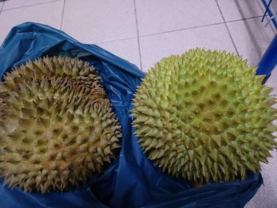 Beli Durian Kawin Isi Pun Tebal Dan Sedap