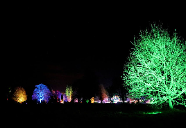 A view of all the trees lit up different colours, with stars in the sky above.