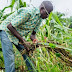 FG To Strengthen Agriculture With Technology