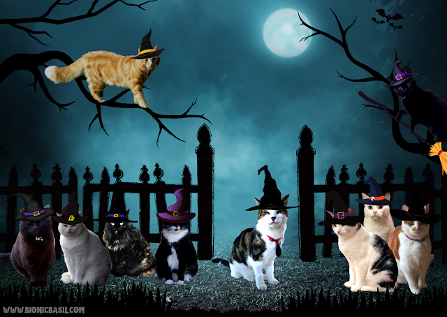 Basil & The B Team Spooky Halloween Selfies ©BionicBasil®