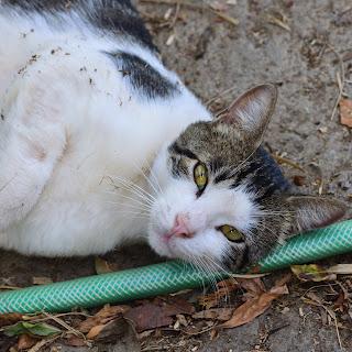cat in Puriscal