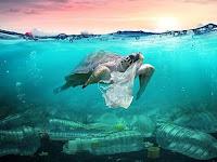 Bikin Ngeri, Ini 4 Fakta Tentang Sampah Plastik di Laut Indonesia