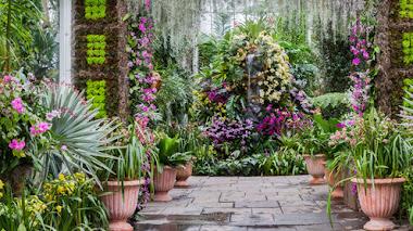 Orchidelirium en el Jardín Botánico de Nueva York