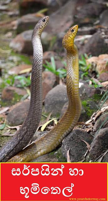 සර්පයින් හා භූමිතෙල් (Snakes And Kerosene) - Your Choice Way