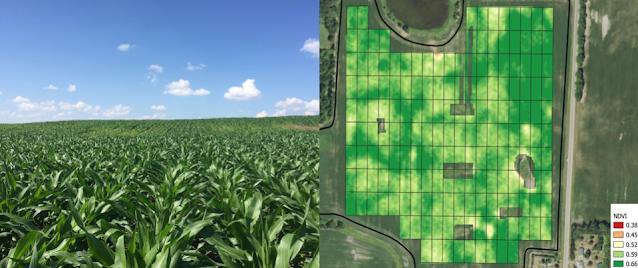 precision ag research nitrogen sidedress minnesota fertilizer corn