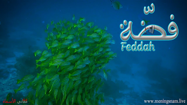 معنى اسم فضة وصفات حاملة هذا الإسم Feddah,