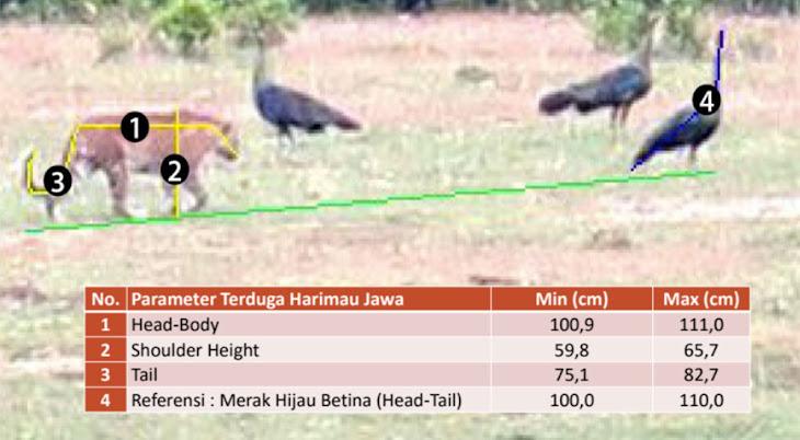 analisa foto harimau jawa