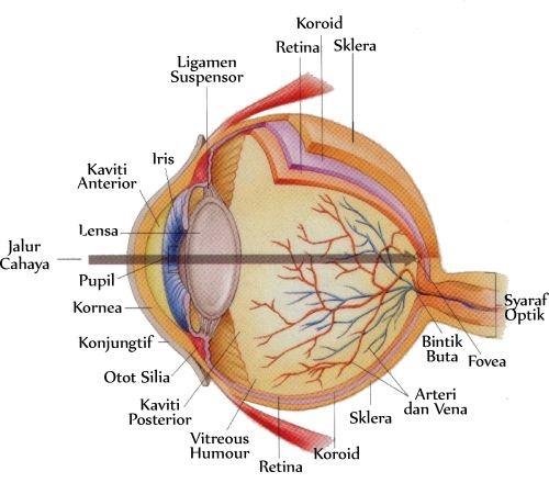 Keajaiban dalam Tubuh Manusia: Mata