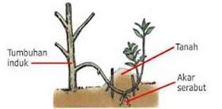 Vegetatif buatan merunduk