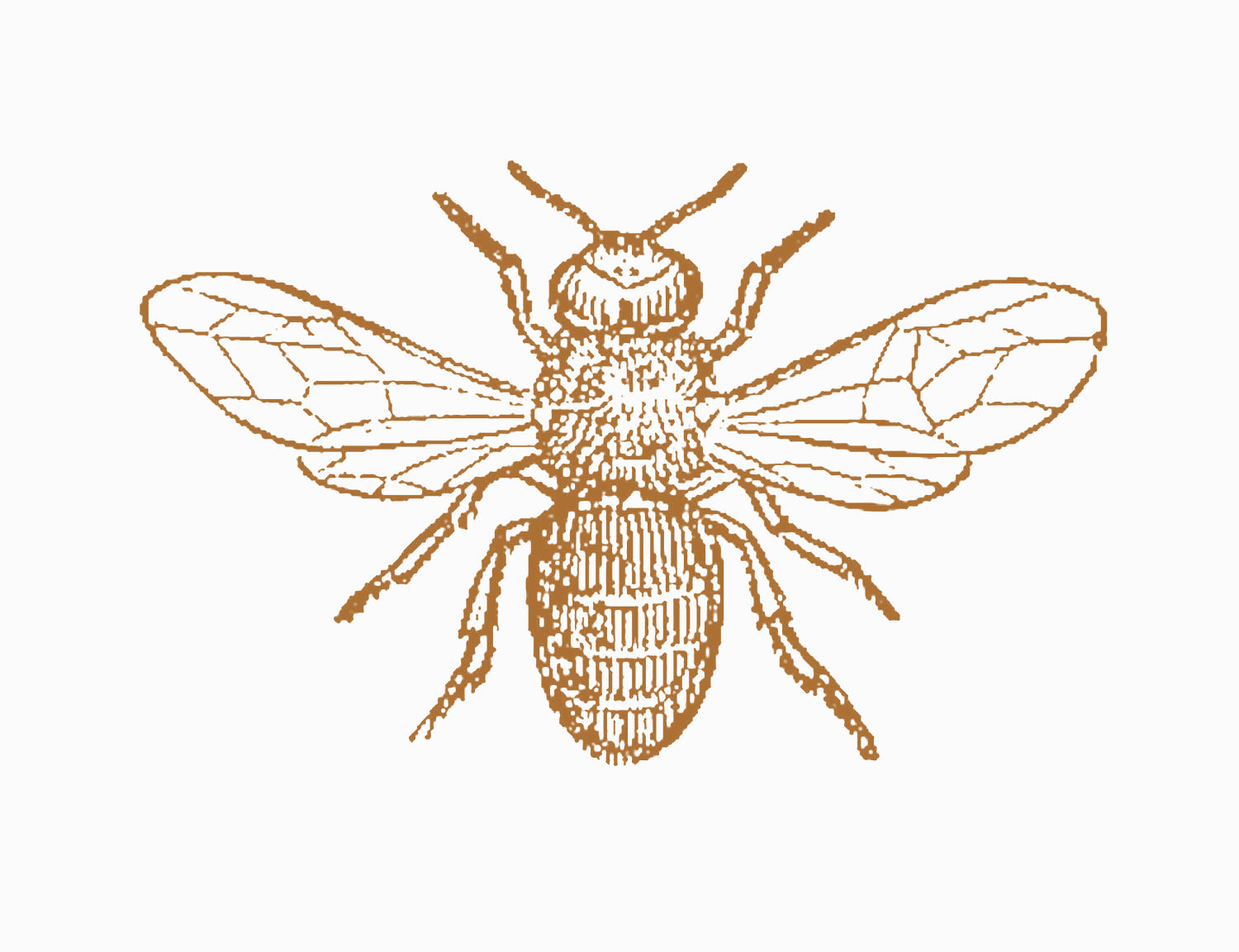 Antique Images: Insect Clip Art: Black and White ...