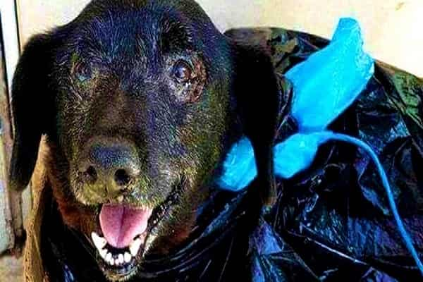 Family Dumps Their Canine In Trash Bag Since They Didn't Want Blood In The Car