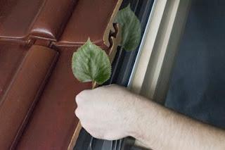 Wiosenne pogotowie okienne – na co zwrócić uwagę podczas pozimowego przeglądu okien dachowych?