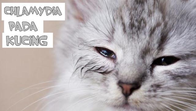 Penyakit Mata pada Kucing