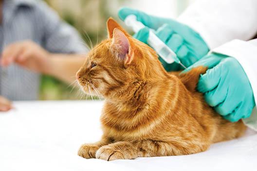 Czy trzeba szczepić kota?