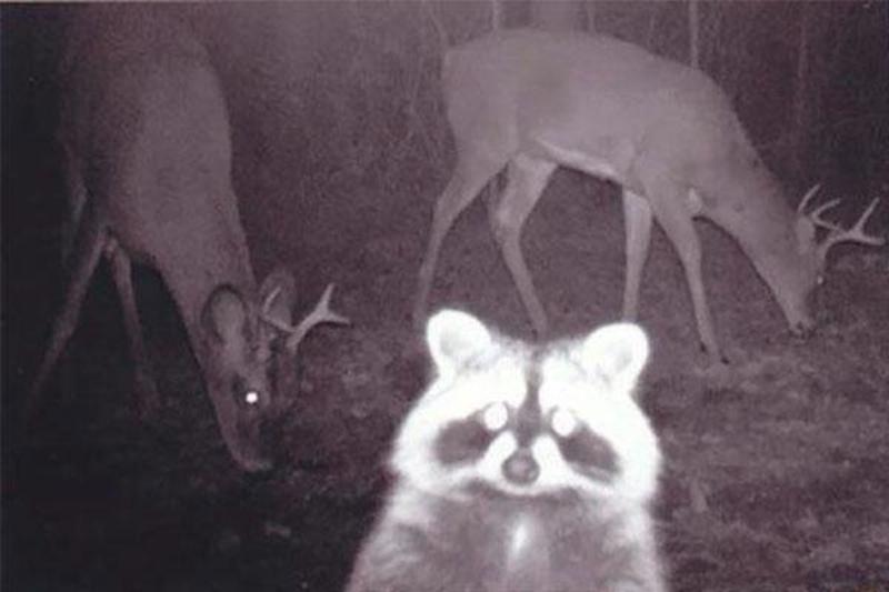 Animals-Selfie