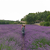 How to visit lavender fields & dreamy villages in the Provence, France