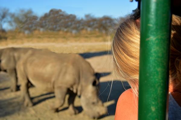 Nashorn im Hintergrund