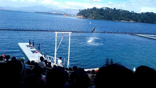 Ocean Adventure Dolphin