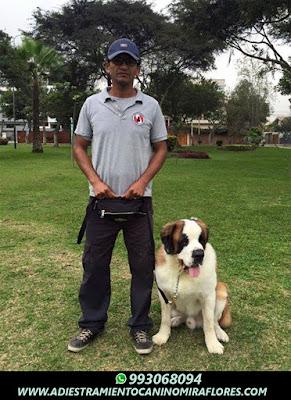 Adiestramiento Canino Chorrillos