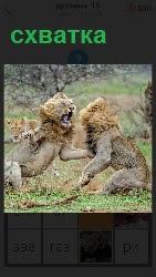 на поляне происходит схватка между хищниками