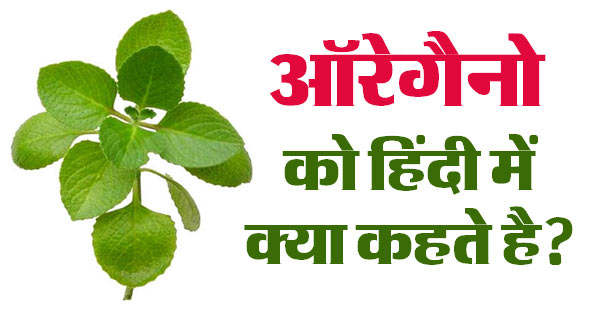 What is the name of Oregano in Hindi