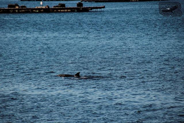 Sitios para ver delfines en Galicia. Faro Punta Cabalo