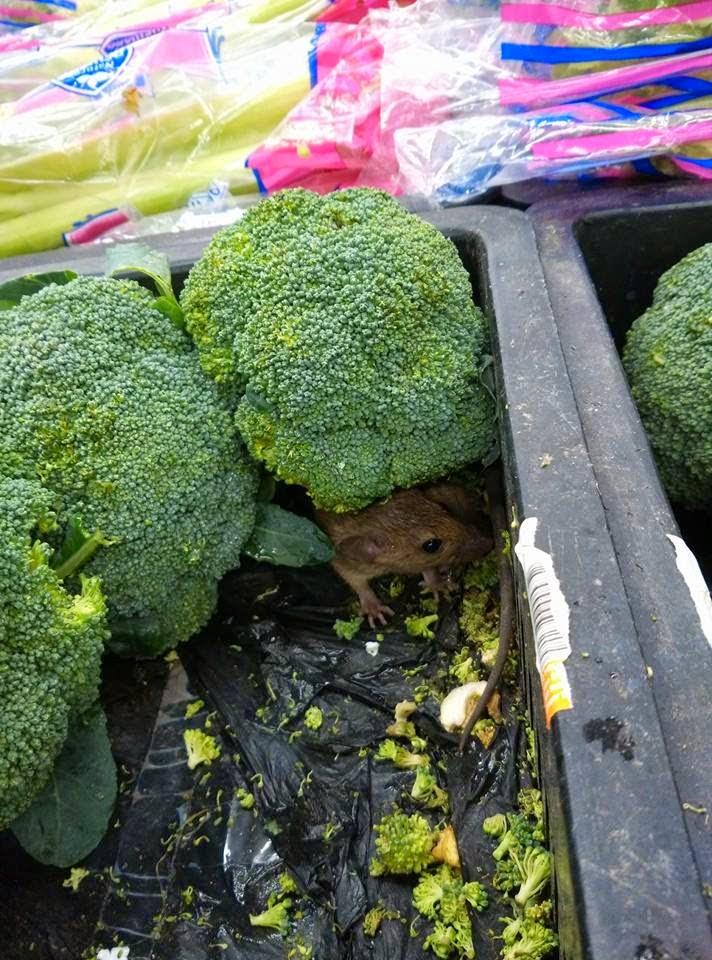 Rat Found Among Broccolis at Aeon Big Supermarket KL Mid Valley