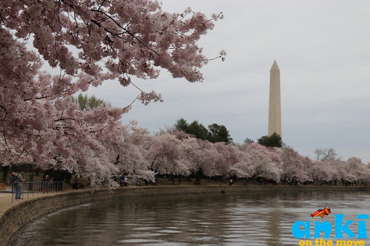 Anki On The Move: National Cherry Blossom Festival 2018 | Peak Blooms & Petalpalooza in Washington DC