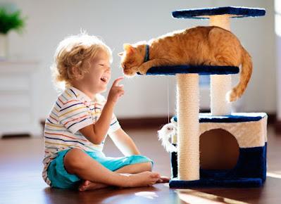 Manfaat Bermain untuk Kucing