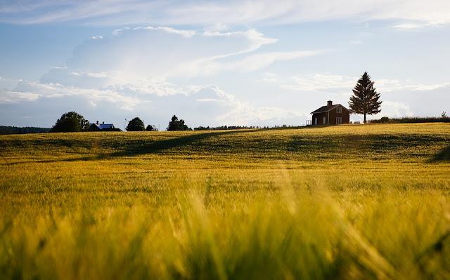 terreno agricolo-confini-proprietà