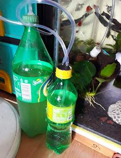 Cara membuat CO2 aquascape