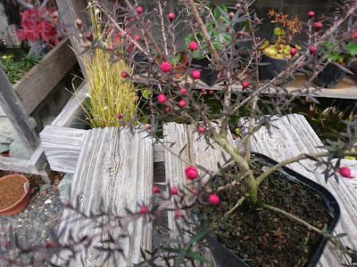 小さい苗木