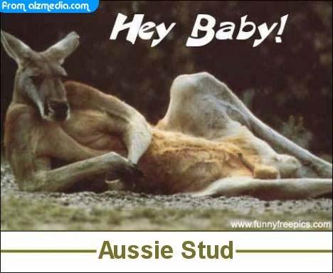 lustige bilder hey baby kanguru. Black Bedroom Furniture Sets. Home Design Ideas