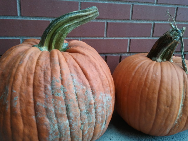 Pumpkins are a great fall super food