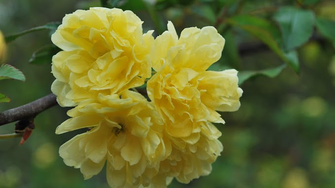 Yellow Flowers Image | Free Download