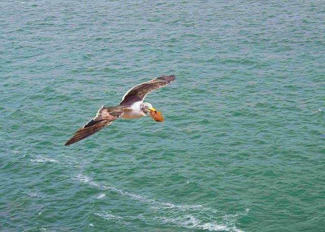 passaro com comida no bico sobrevoando o mar