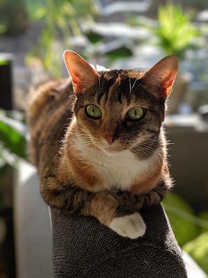 Katze europaisch Kurzhaar vor unscharfem Hintergrund