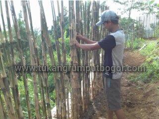 Jual pohon bambu jepang di cikarang - tukang rumput bogor