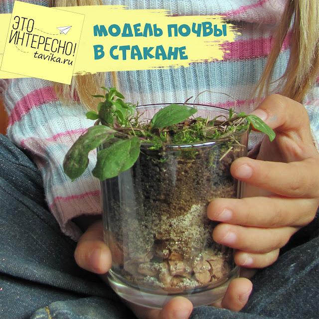 строение почвы на примере стакана