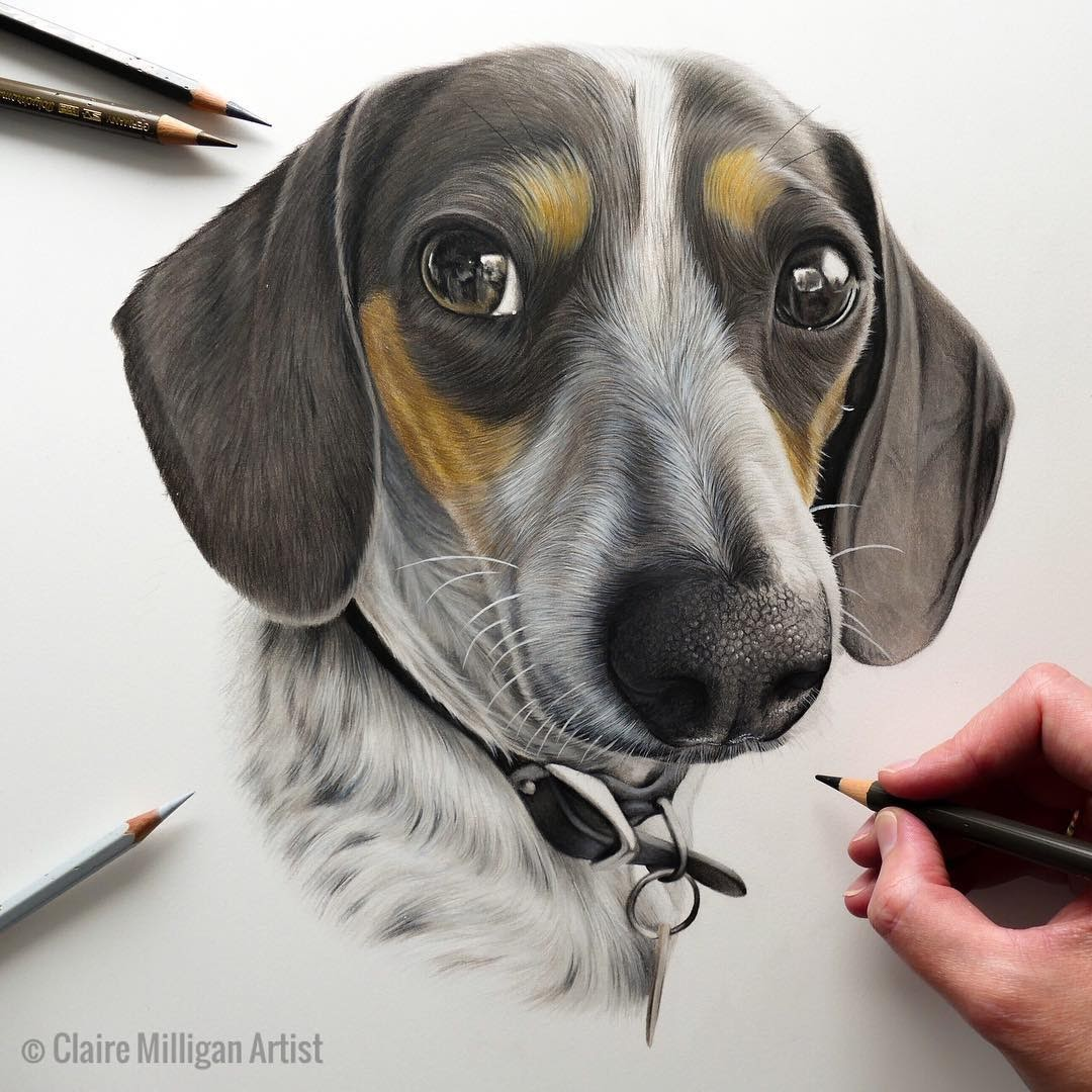 03-Miniature-Dachshund-Claire-Milligan-Pet-Portraits-and-Wildlife-Art-www-designstack-co